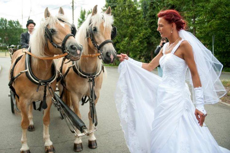 Hochzeit Braut mit Pferd